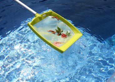 Сачек в бассейн